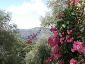 Unser Ferienhaus in Ligurien an der Blumenriviera. Im Urlaub an der italienischen Riviera Aussicht