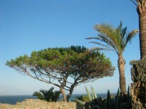 Bordighera. Im Urlaub an der italienischen Riviera im Ferienhaus in Ligurien