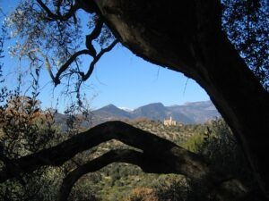 Dolceacqua. Olivenbaum mit Ausblick vom Ferienhaus Casa Rochin