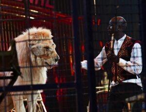 Marcel Peters und seine Löwen