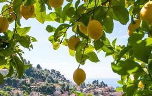Menton die Stadt der Zitronen an der französischen Riviera