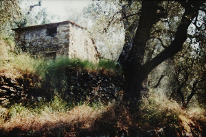 die alte Ruine