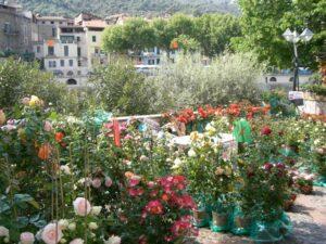 Dolceacqua Blumenmarkt. Im Urlaub an der italienischen Riviera im Ferienhaus in Ligurien