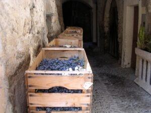 """Dolceacqua, an der italienischen Riviera in Ligurien.""""vendemmia"""""""