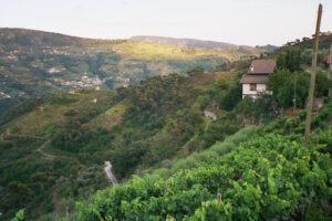 vielleicht im Hinterland der italienischen Riviera in Ligurien...?