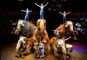 Familie Gartner mit ihren Elefanten.