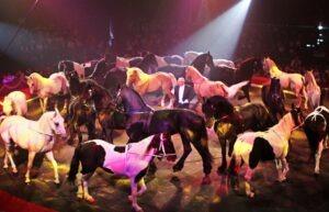 Vincio Canestrelli-Togni mit seinen Pferden