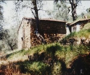 Eine Ruine im Olivenhain