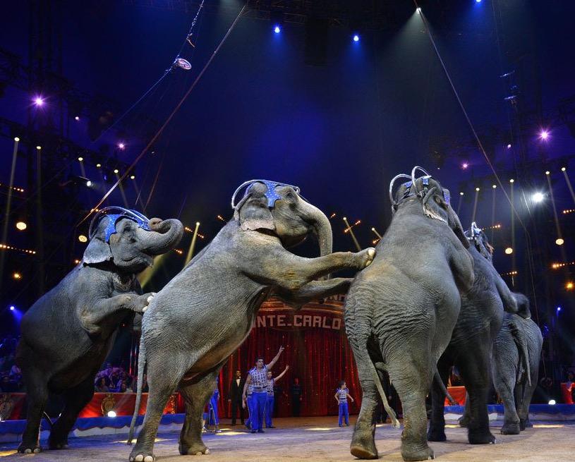 die Familie Gaertner mit den Elefanten