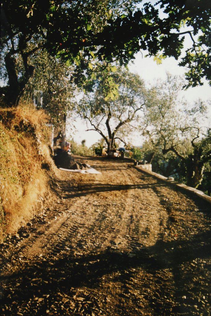 Zufahrt zum Casa Rochin