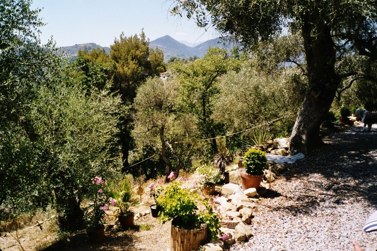 Oliven Palmen Oleander