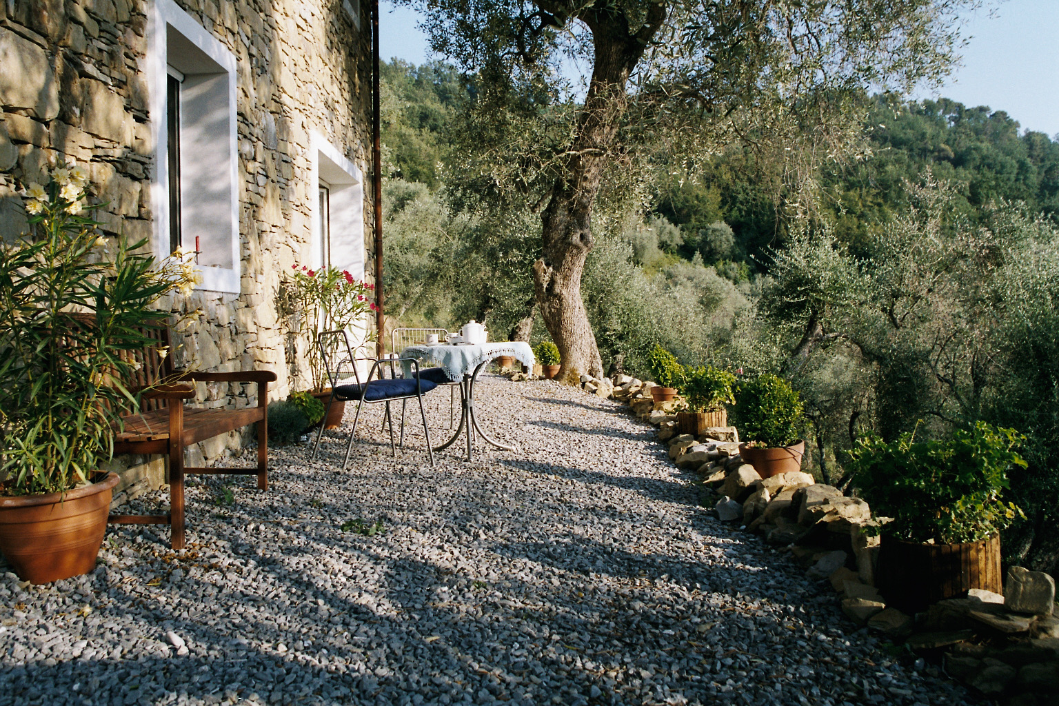 die Terrasse neu bepflanzt