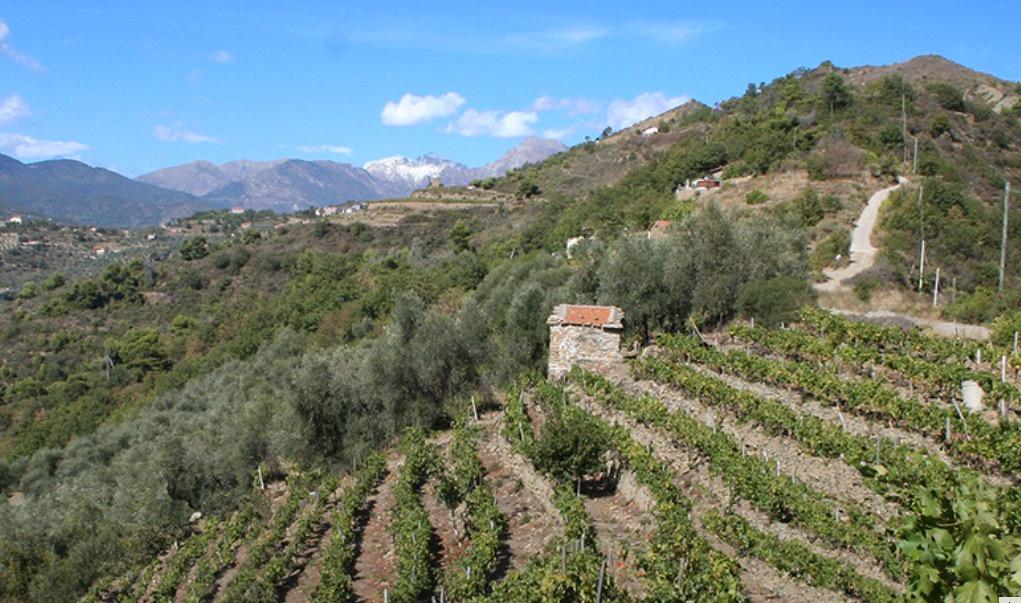 Dolceacqua Weingut von Antonio Zino Mauro